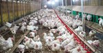 Department working to control avian flu outbreak