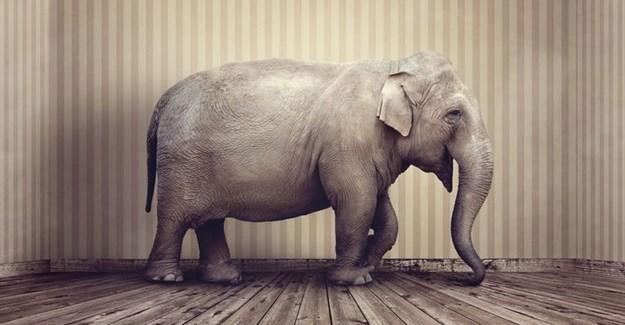 #FMAdFocus2017: The elephant in the room - The role of digital