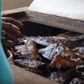 New fish-smoking tech first introduced in Africa launched in Asia