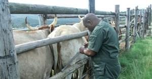 Dr. Nkululeko Nyangiwe. Image: Sonja Matthee
