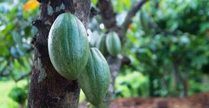 Mondelez International cocoa MoU to help protect Ghana's forests