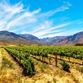 Paarl Tourism, Paarl Wine Route merges into one brand
