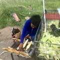 Mealie sellers taste success