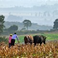 Lands committee to downsize farms