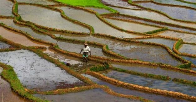 Paolo Crosetto via  - Rice paddies in Madagascar