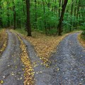 Take the road less travelled when you communicate with your target audience