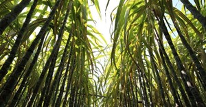 Flour Mills of Nigeria PLC commissions N50bn Sunti Golden Sugar Estate in Niger State