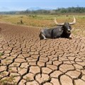 Climate change a top concern for agribusinesses