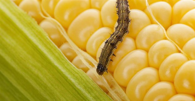 Why African farmers should balance pesticides with other control methods