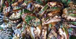 Hefty sentences for abalone smugglers