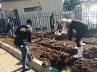 McCain grows veggies for Mandela Day
